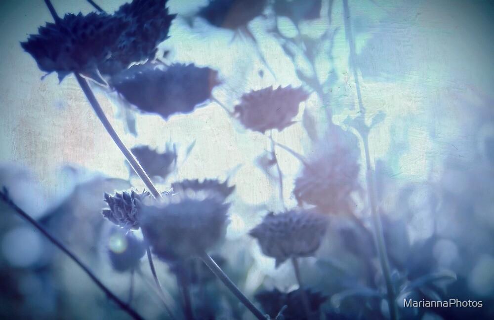 blue dream by MariannaPhotos
