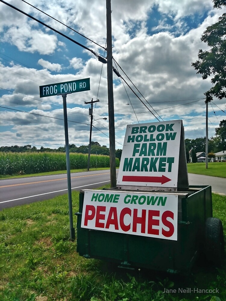 Home Grown Peaches for Sale on Frog Pond Road by Jane Neill-Hancock