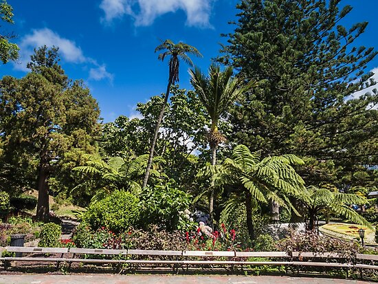 Botanic Gardens Seating by Michael McGimpsey