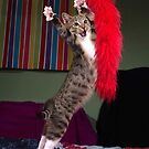 Paso Doble kitty by turniptowers