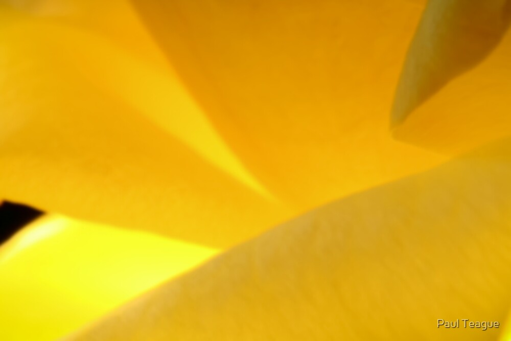 Intimate Yellow Rose P2 by Paul Teague