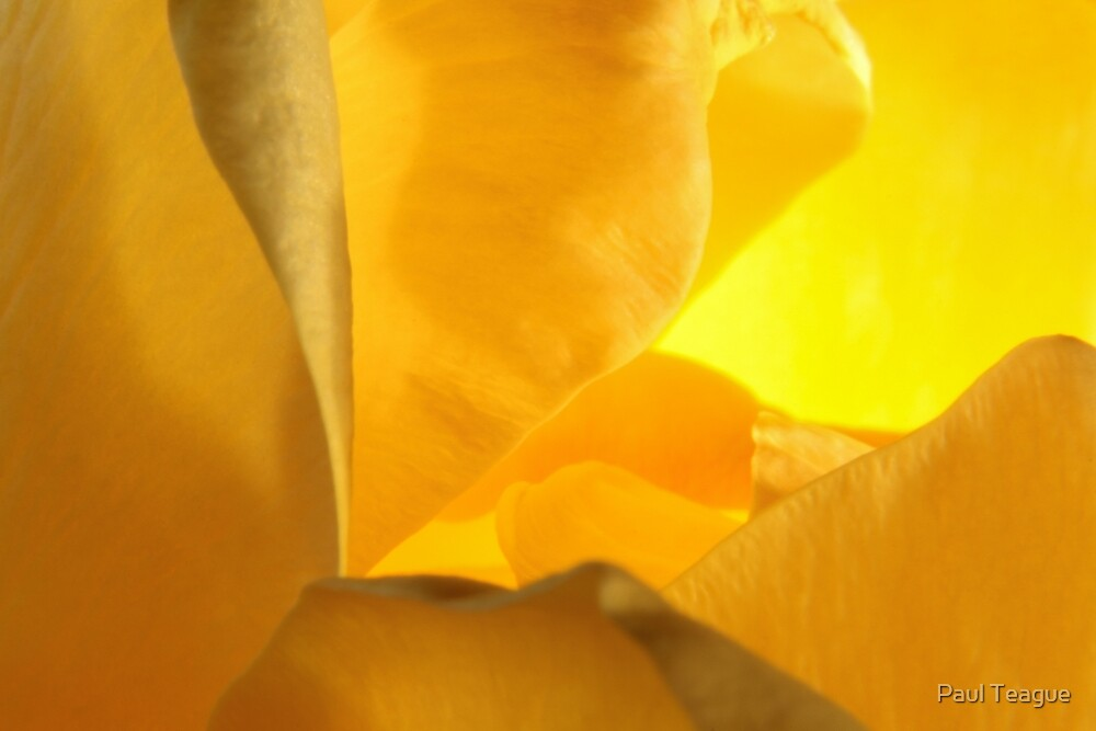 Intimate Yellow Rose P1 by Paul Teague