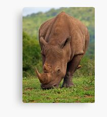 Brute Force and ignorance Canvas Print