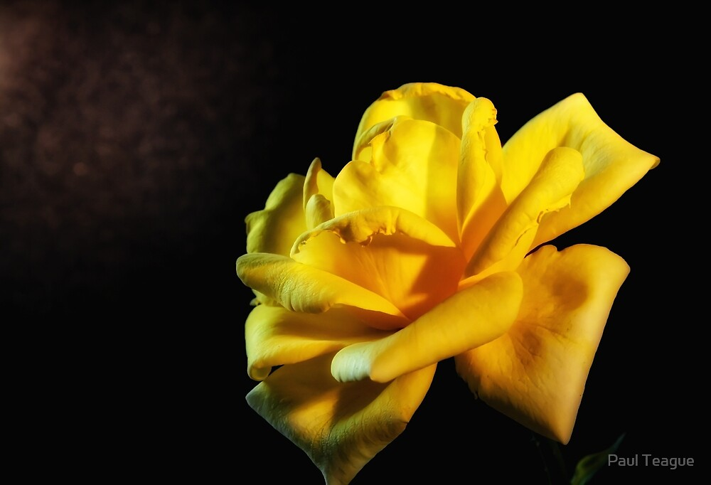 The Yellow Rose by Paul Teague