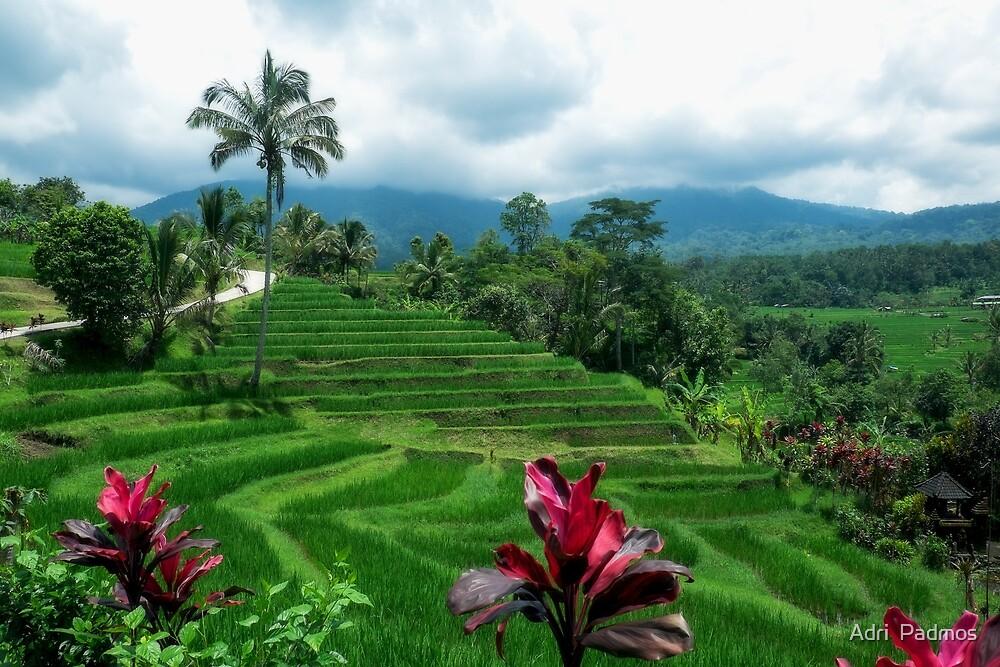 The rice terraces of Jatiluwih by Adri  Padmos