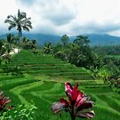 The rice terraces of Jatiluwih by Adri  Padmos