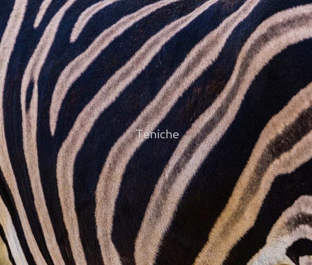 Zebra stripes by Teniche