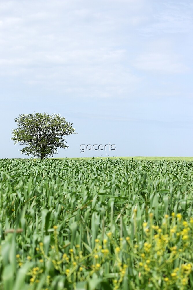 green wheat and one tree field by goceris