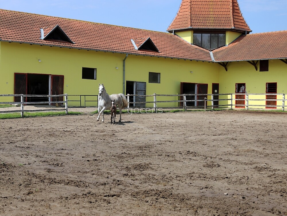 Lipizzaner horse and foal by goceris