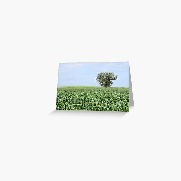 one tree in green wheat field landscape Greeting Card