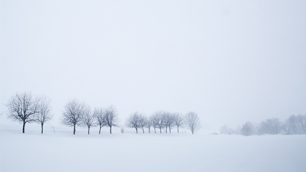 Snowstorm Trees by Heath Carney