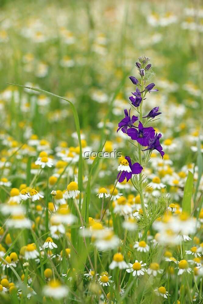 wild flowers meadow spring season by goceris