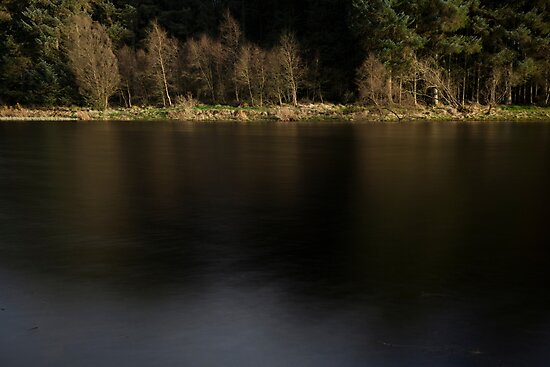 crombie country park by codaimages