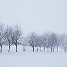 Trees in Snowstorm by Heath Carney