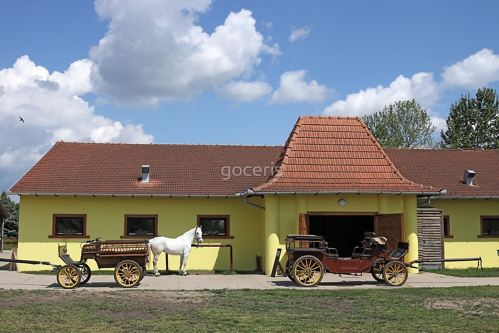 Lipizzaner horse and carriage on farm by goceris