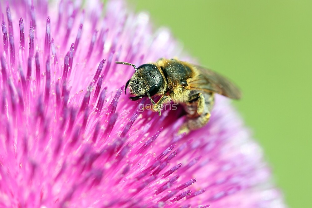 bee on flower close up by goceris