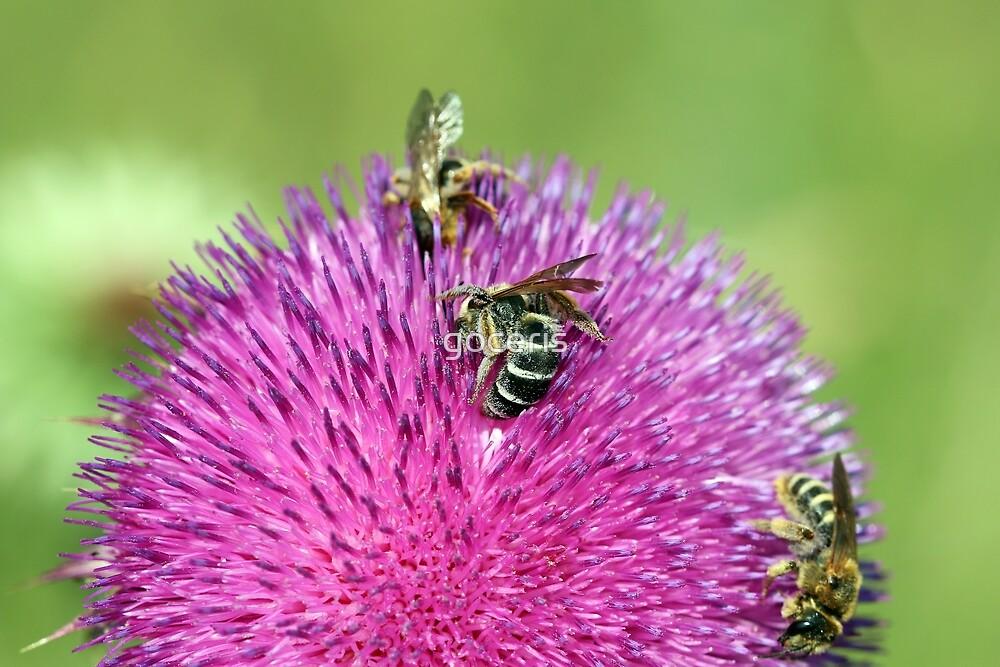 three bees on flower spring season by goceris