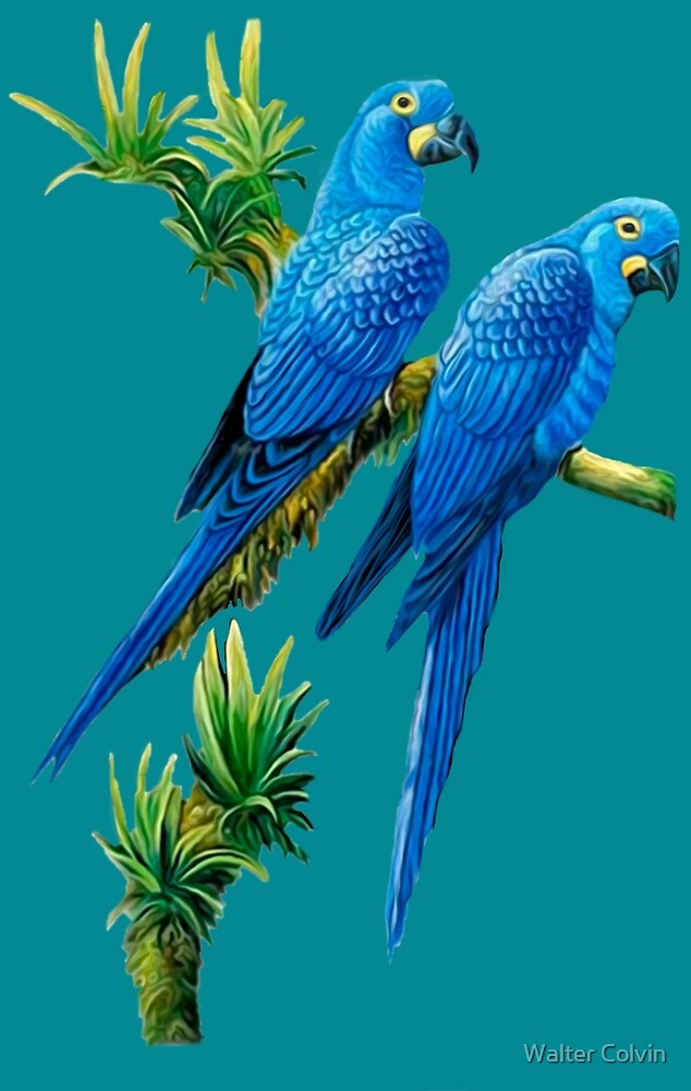 Two Blue Parrots by Walter Colvin