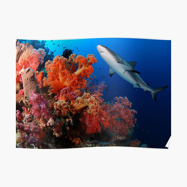 Shark and reef Poster