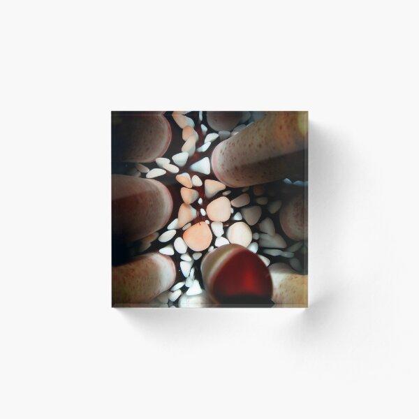Pencil Urchin Acrylic Block