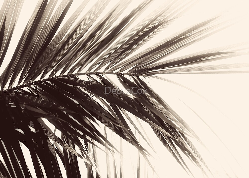 Feathered by DebraCox