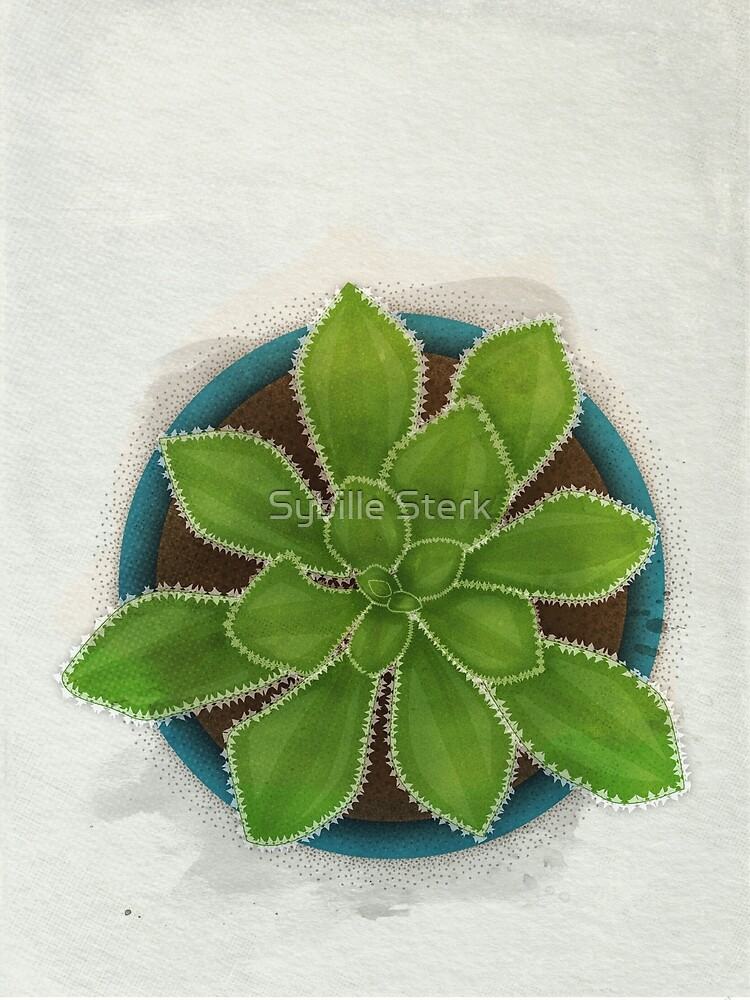 Succulent in Pot by Sybille Sterk