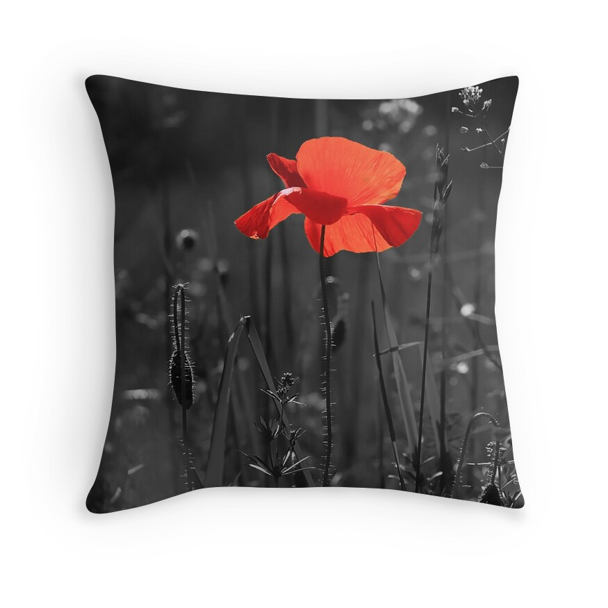 Red Poppy Flower in Black and White Field