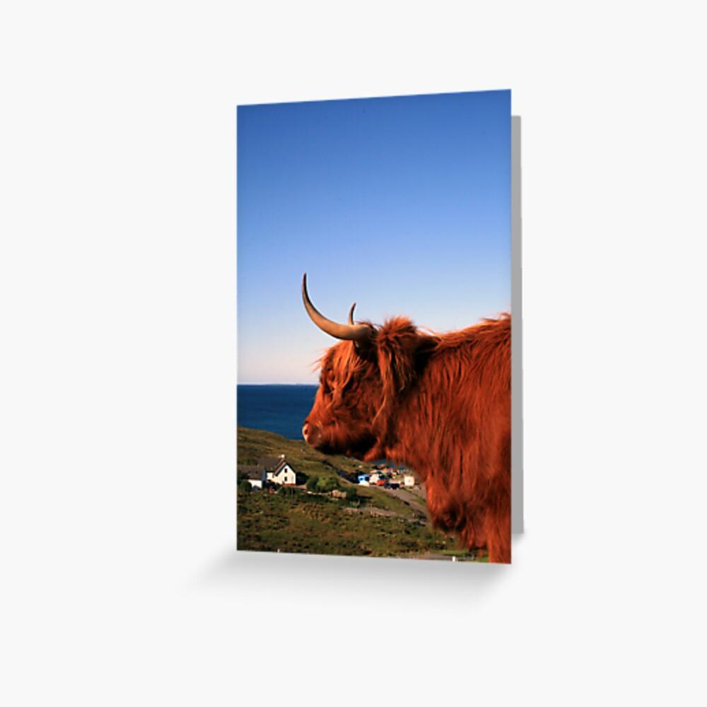 Highland Coo Greeting Card