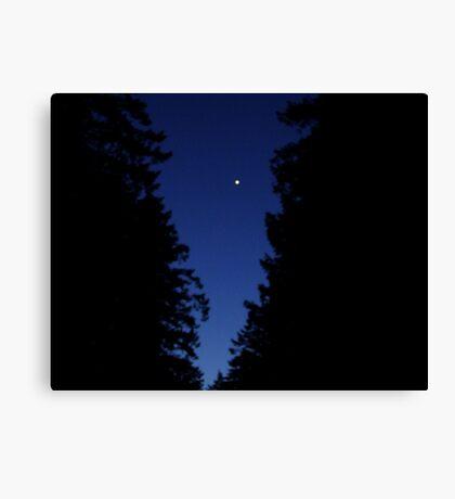 Venus In The Trees Canvas Print