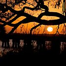 Sunset through the Branches by Jonicool
