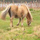 Pretty Pony by karenlynda