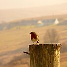 Robin at Carbost, Skye by chriscroxall