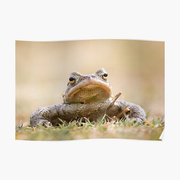 Toad Poster