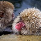 snow monkey in the onsen ,japan by milena boeva