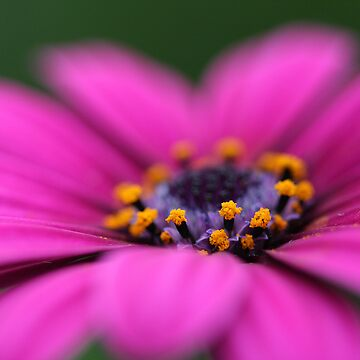 Pink Pop by minkas