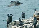 Cormorants At Sea by Betsy  Seeton