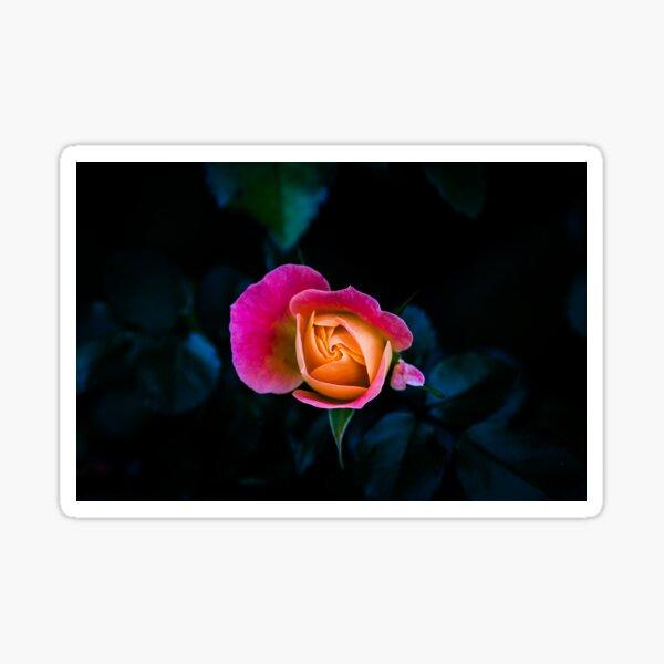 Blooming - Flower Photo Sticker