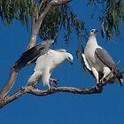 Eagle Love by byronbackyard