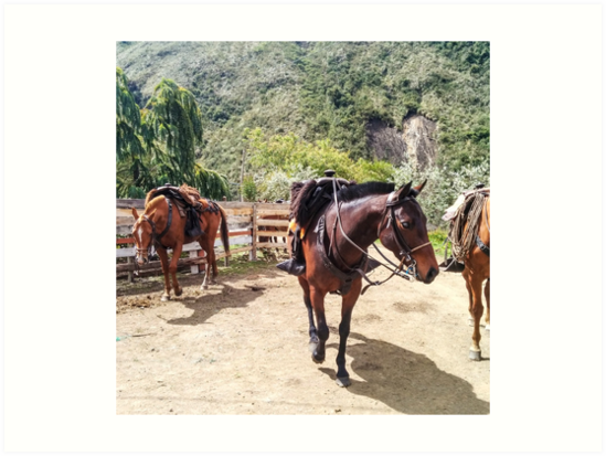 Three horses with saddles waiting for riders by Kendall Anderson