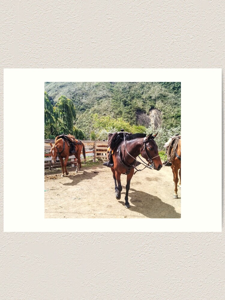 Alternate view of Three horses with saddles waiting for riders Art Print