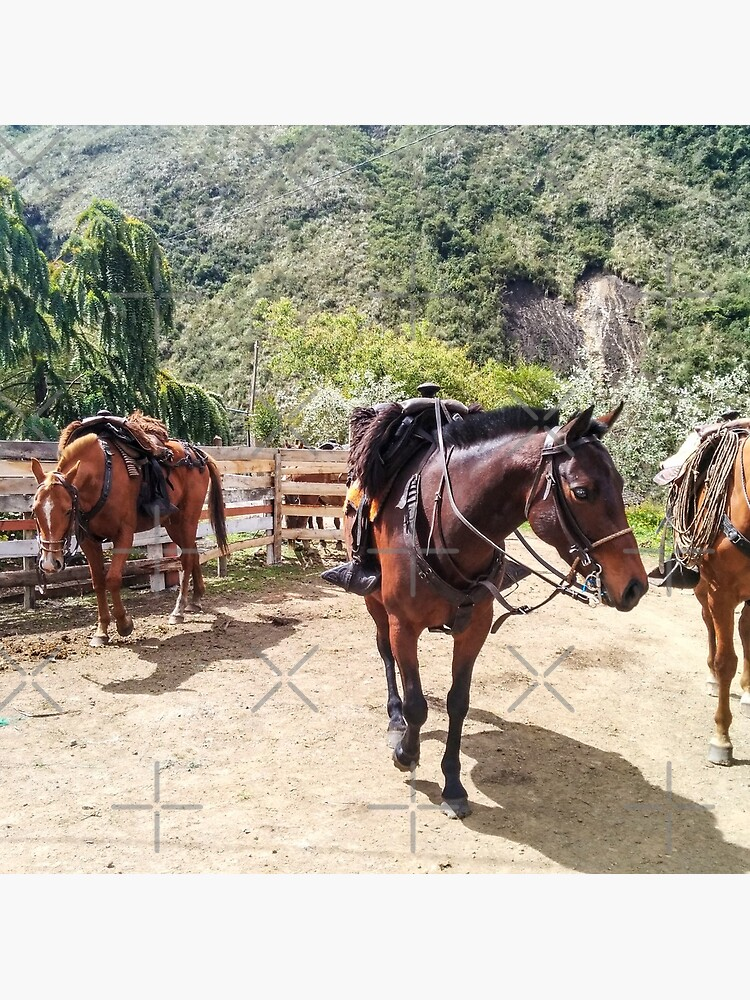 Three horses with saddles waiting for riders by kpander