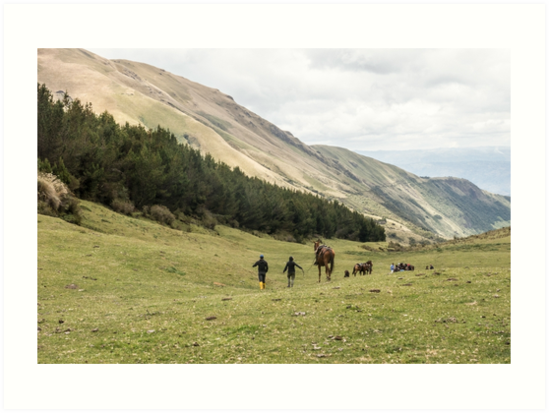 Horses in a valley of the Andes mountains, Ecuador by Kendall Anderson