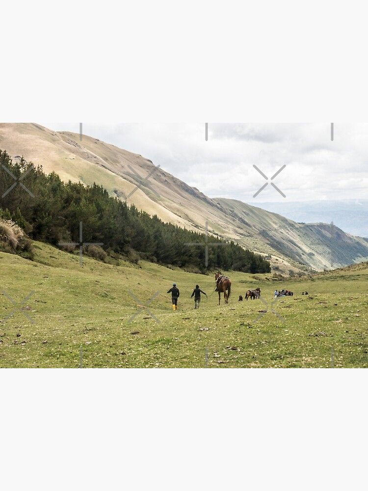 Horses in a valley of the Andes mountains, Ecuador by kpander