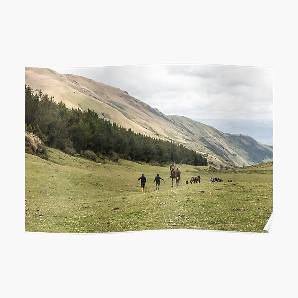 Horses in a valley of the Andes mountains, Ecuador Poster