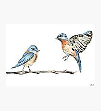 Bluebirds watercolour and ink Photographic Print