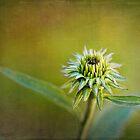Echinacea Bud by Renee Dawson