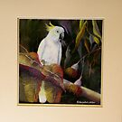Midnight Watch    Sulphur Crested Cockatoo by sandysartstudio