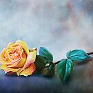 Yellow Rose & Rain Drops by Renee Dawson