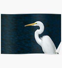 Great Egret Poster