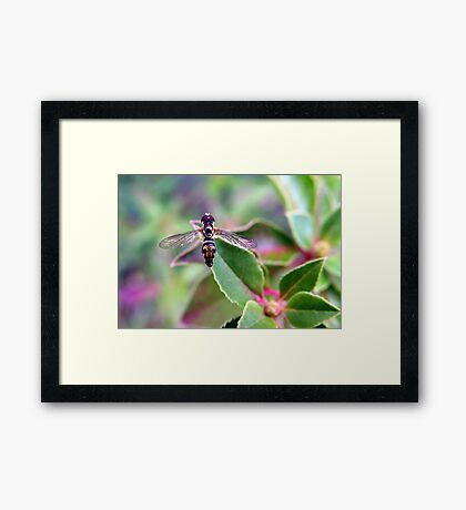 The Perfect Poser Framed Print